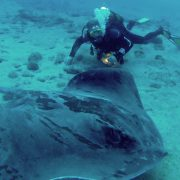 Atlantic Ray Diving Tenerife