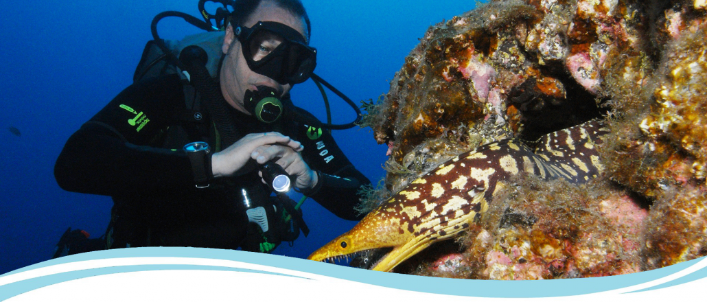 diving tenerife tiger moray eel and diver