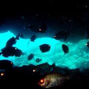 Neptunes cave diving tenerife