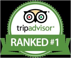 aqua-marina dive tenerife tripadvisor number 1 top rated