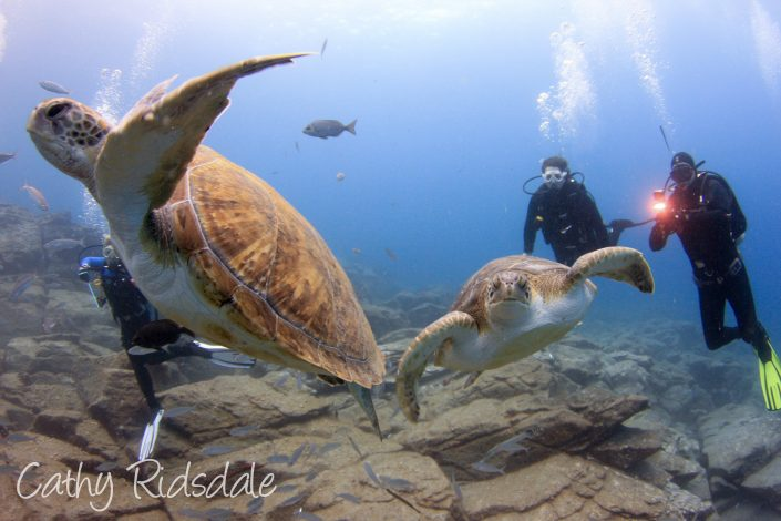 turtles and divers in tenerife