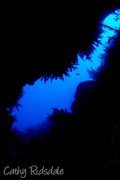 cave with black coral tenerife