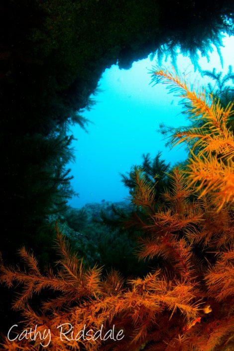 Barranco del aqua diving tenerife