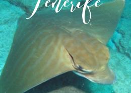diving photos tenerife