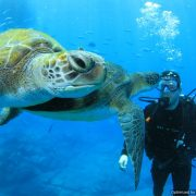 Discover Scuba Diving With Turtles Tenerife