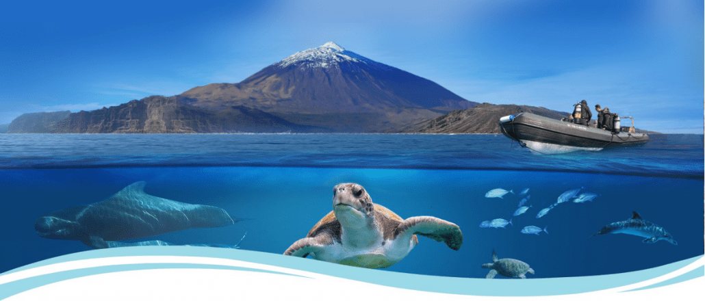 Diving in Tenerife with Aqua-Marina 5* PADI Dive Centre